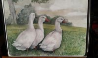 Geese Placemats/Coasters